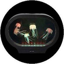 Aquarium - ovale vorm met kwallen