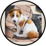 Puzzel Hond - hout 16 delig